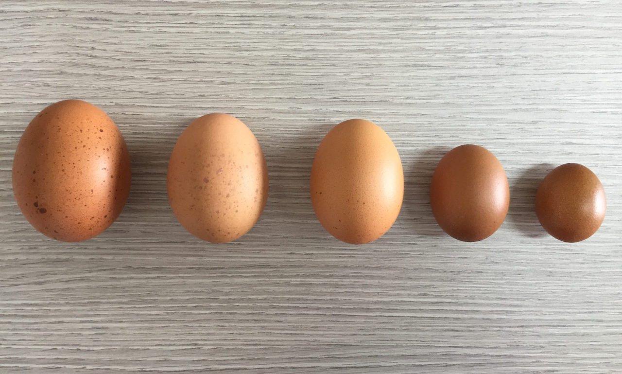 quante uova a colazione posso mangiare