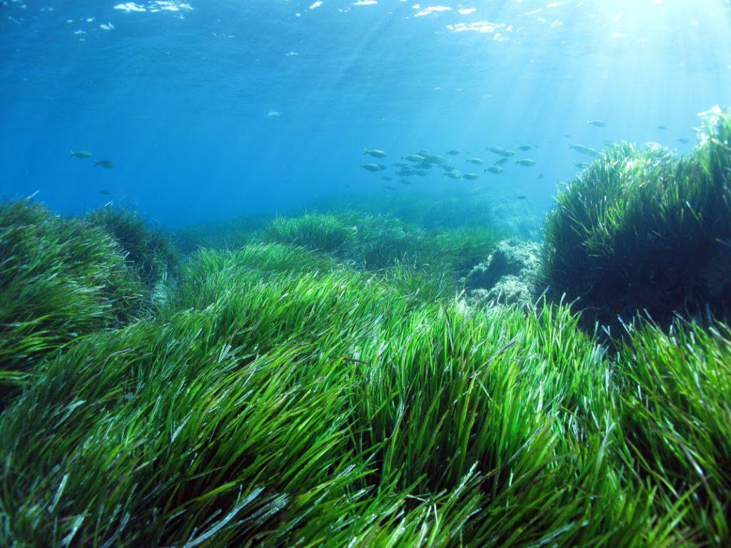 alghe-marine-fanno-dimagrire-LiFEKEY